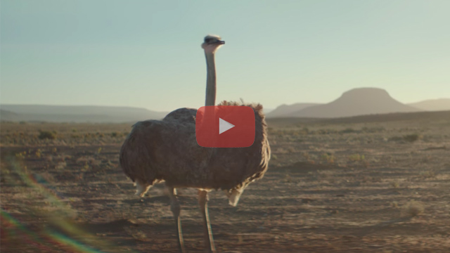 Samsung Ostrich: Do What You Can't